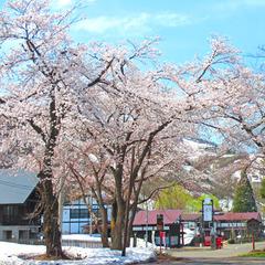 ≪4-5月限定≫ワンコイン飲み比べ●春期限定×日本酒【無ろ過生原酒】3種類を味わう♪季節の特典プラン