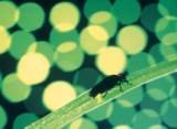 濁り湯の休日 残雪の春から山菜♪高山植物(^^)夏の基本プラン(部屋タイプ指定無しトイレ付和室)