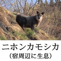 【和室6畳】 高崎アリーナ、富岡製糸場、軽井沢への拠点に♪ 直前予約で素泊まりプラン!