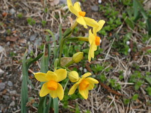 期間限定☆春から夏へのケーキバイキングの無いプラン(2食付)