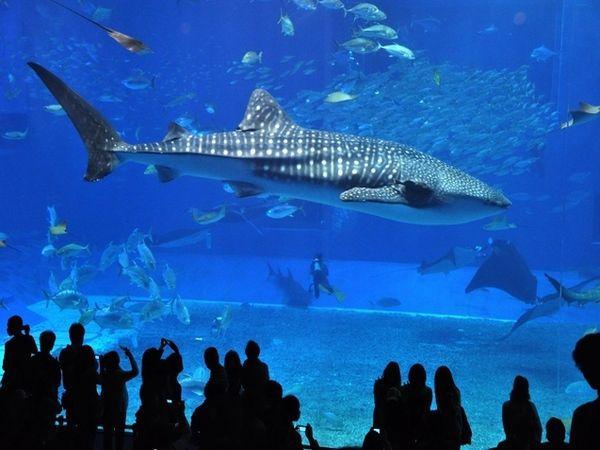 優雅な海の世界へ・美ら海水族館入場券付き【素泊り】