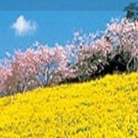 【マザー牧場チケット2枚付き】★朝食バイキング★大浴場