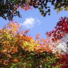 【平日限定】「爽やか素泊まり」木の香るコテージで過ごす休日(TAX)
