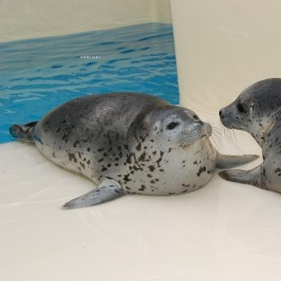 【朝食付き】2名1室利用 加茂水族館入館券つきプラン
