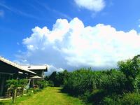 沖縄北部の観光に☆スタンダードプラン