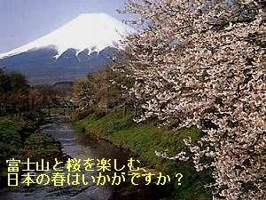 【春得】桜と富士山を楽しむ日本の春・世界遺産へ、のんびり大人旅