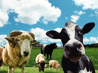 ≪マザー牧場入園券付≫自然満喫!かわいい動物に癒されよう♪【楽天限定】