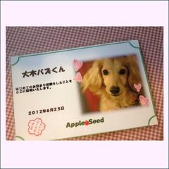 【アッパレしず旅】☆看板犬見習い シェルティのマリーが応援☆ ワンちゃんの初めてのお泊りプラン♪