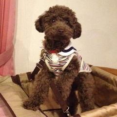 ☆看板犬見習い シェルティのマリーが応援☆ ワンちゃんの初めてのお泊りプラン♪