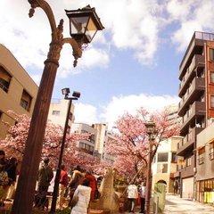 【2食付+梅園入場券付】 春の香り漂う 『熱海梅園梅まつり』 & 『あたみ桜』 を見に行こう!