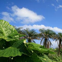 【沖縄県民限定】10%OFF!沖縄の魅力再発見/西表の風につつまれた癒しの時間