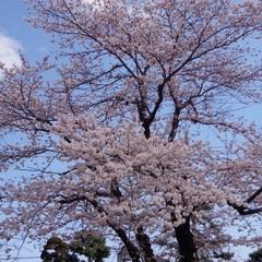 【お花見プラン】春といえばお花見♪お得な特典が付いた<期間限定>1泊2食付きプラン♪