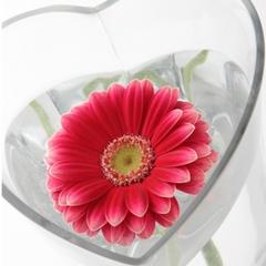 【大切な人と、大切な日】積善館で祝う特別な記念日。〜心に想う大切な人に気持ちを届ける1日〜