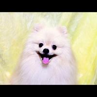 【ポメラニアンパーティ開催!】★6/24★ポメちゃん大好き大集合♪♪[1泊2食]
