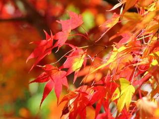 ◆秋得◆秋のご旅行に!ちょっぴり嬉しい選べる特典付き /素泊まり