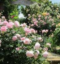 【ローズガーデンチケット&バラの香りの入浴剤付♪】バラとハーブを堪能&自慢の金目鯛姿煮付の夕食