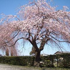 【期間限定セール★春のお出かけにぴったり♪】信州お花見特割プラン