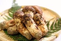 【9/10〜10/10限定】秋の味覚松茸を食す