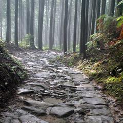 【しあわせわかやま】≪熊野古道の自然を守ろう!≫公共交通機関で来られるお客様に!うれしい特典付き♪