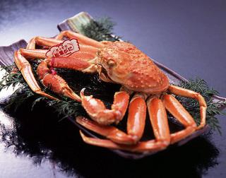 お部屋が小さいからお得!特選鳥取県産・赤タグ付き使用 活け松葉蟹づくし