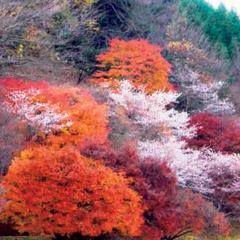秋から冬の連泊プラン!【茶臼山高原4泊8食】