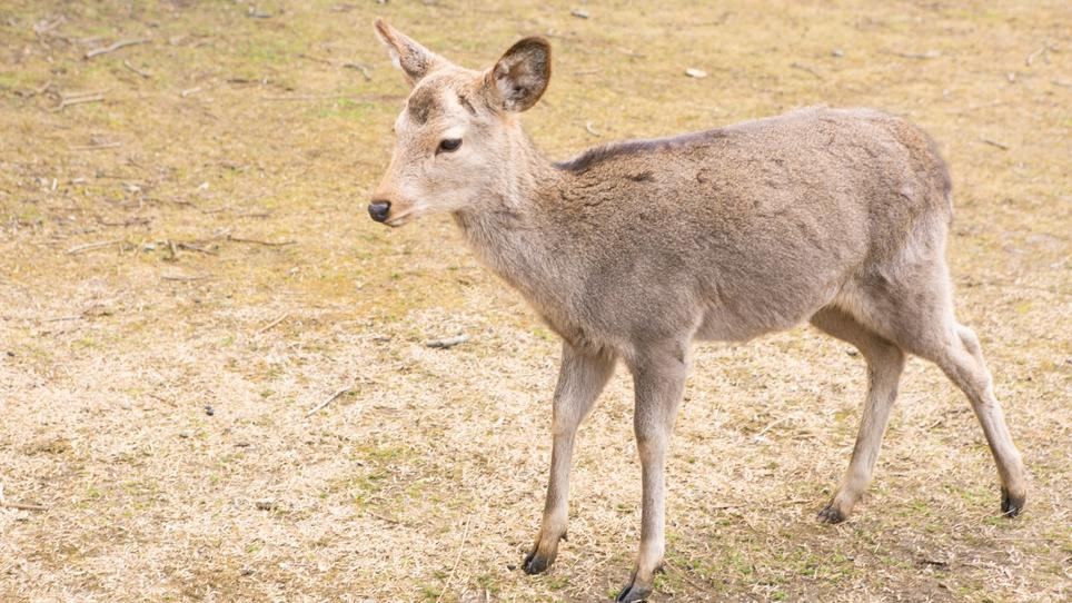奈良白鹿荘 関連画像 1枚目 楽天トラベル提供