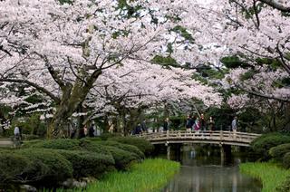 【春季限定】金沢ですごす春—格安プラン— 素泊り