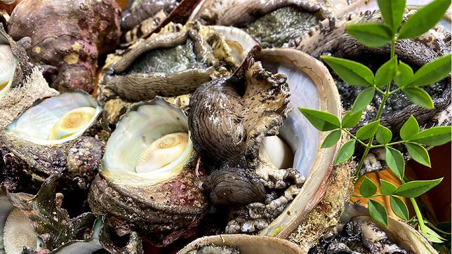 海の幸◆の新鮮活造り!獲れぴちを召し上がれ★2食付