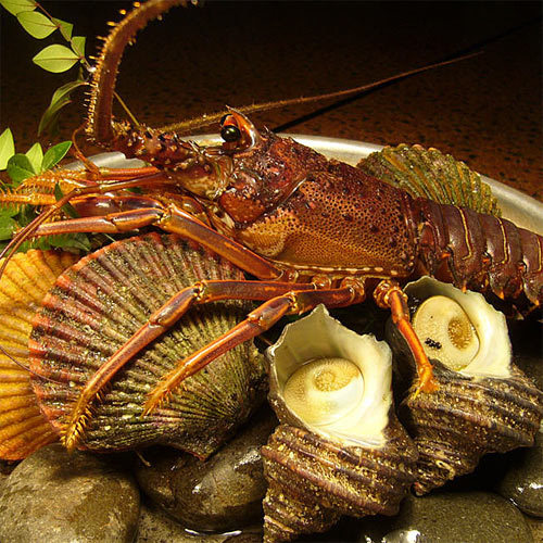 ◆真鯛しゃぶ&新鮮貝類のさざれ焼き◆得々♪美味しい食事に満足♪美肌に◎の人工温泉も人気!