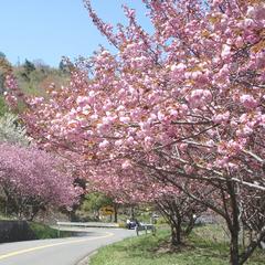 【3月〜5月限定】爽やかな季節の旬を会席に♪高原で過ごす春旅<こだわり会席春プラン>