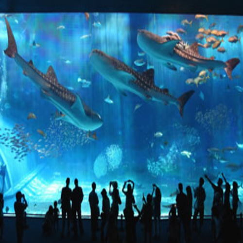 【楽パックSALE】★特典付!駐車場無料&美ら海水族館チケット付☆世界最大級の海の世界を体感♪朝食付