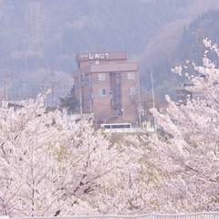 【家族同室】【1泊2食付き】春得、水芭蕉の森♪&桜♪ライトアップにGO♪ゴールデン(^^♪