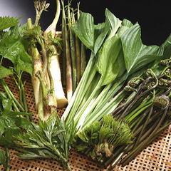 【春の味覚◆山菜会席プラン】西和賀ブランドご当地食材「西ワラビ」を中心に山菜をご堪能ください♪