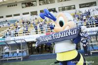 目指せ!J1自動昇格!アビスパ福岡 【サッカー観戦チケット】付きシングルプラン