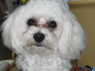 ペット(小型犬)を別棟のゲージで預かる宿泊プラン