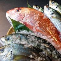 【ポイント5倍還元】☆近海でとれた新鮮な地魚を使った『瀬のもん料理』☆お魚の調理法が選べます♪
