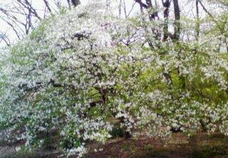 新緑の那須高原 【2食付】 マウントジーンズ那須ゴンドラで空中散歩