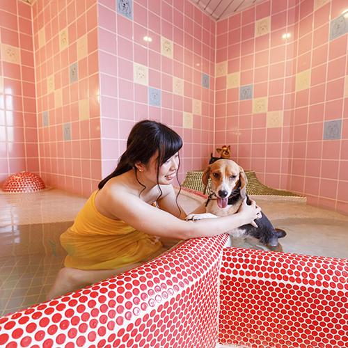 鬼怒川温泉 ペット同室宿泊パイオニアの宿 きぬ川国際ホテル image