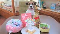 【愛犬・愛猫バースデープラン】年に1度の誕生日をお祝い!ケーキやプレゼントなどの特典つき