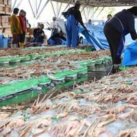 【早割30】【冬・美味少量】1キロ超えの上質ガニ!量より質にこだわる間人蟹フルコース<花こでまり>