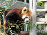【ファミリーにオススメ!】池田動物園チケット付プラン(朝食付)