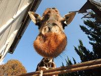 【ファミリーにオススメ!】池田動物園チケット付プラン