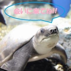 ★山の水族館チケット★【素泊り×北海道アルカリ天然水】