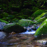 【ガイド+2食付】白谷雲水峡トレッキング♪もののけ姫の『苔むす森』で神秘の世界を楽しむ-半日コース