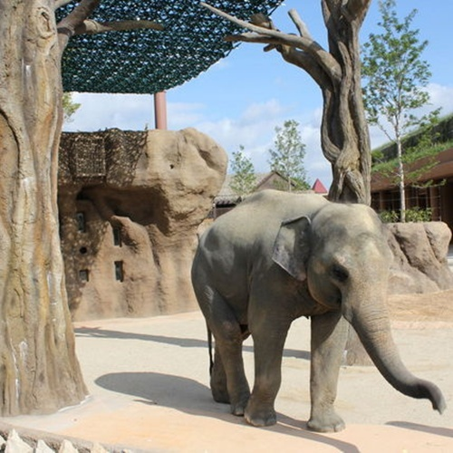 東山動物園入場券付き宿泊プラン ご朝食付