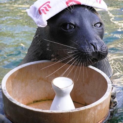 【温泉アザラシに会いに行こう!】お子様と一緒に楽しむ!箱根園・水族館入館券付きプラン♪