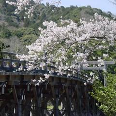 【春旅SALE】春の伊勢志摩へ! 朝食付きプランがスペシャルプライス!