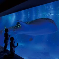 みんなで楽しい思い出を作ろう! のとじま水族館チケット付きプラン
