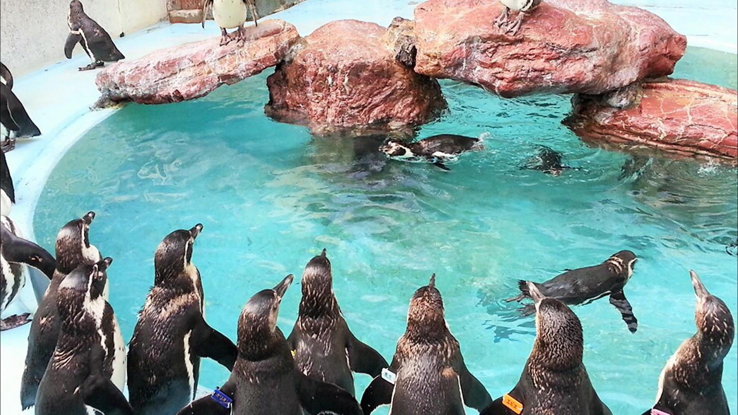【桂浜水族館入館券付】SNSで人気♪ハマスイで海の生き物たちとふれあい体験♪一泊夕朝食付