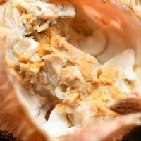 【4〜6月限定】≪オホーツク海明けの活毛蟹と北海道産生ぼたん海老の旬一皿≫ご夕食翠山御膳